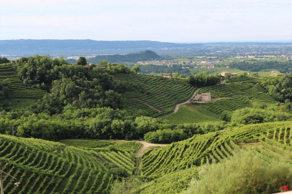 Le colline del prosecco di Valdobbiadene e Conegliano, ricoperte dai vitigni di uva bianca glera.