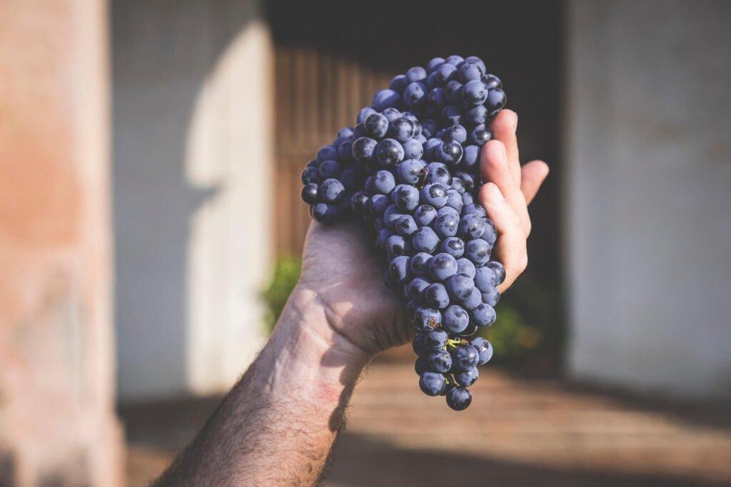 Mano sorregge un grappolo d'uva della varietà Cabernet, di fronte alla porta d'ingresso alla Cantina.