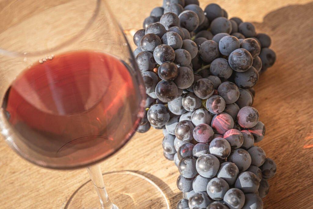Calice di vino rosso Grinera e grappolo di uva Merlot.